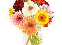 Fresh Flowers / Send Fresh Flowers to Bangalore
