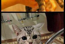 Cute cats <3