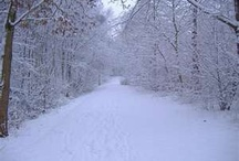 Let it snow, Let it snow, Let it snow ❄️ / by Emily Morton