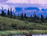 Alaska Cruise Tour / Exploring Alaska with Norwegian Cruise Lines on the Denali Express