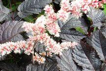 shade & partial shade plants