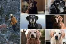 Amazing Animal Stories / Stories to depict the love and inspiring moments of our pets!