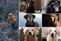 Dog Heros, Working Dogs