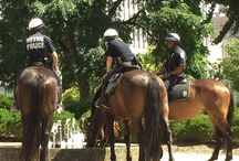 LMPD Mounted Patrol