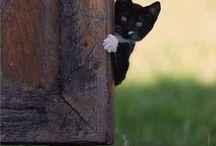 Pretty Kitties! / Photos of beautiful cats.