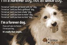 Dog Love Letters