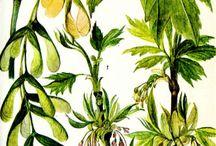 мир растений