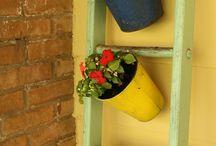 Kert,Virágok