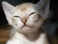 Gatto...Cats