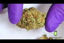 léčba cannabisem