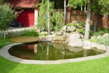 Пруд и бассейн   Pond & Pool
