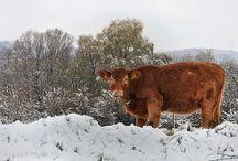 Winter Photos / Ejva.R Photography