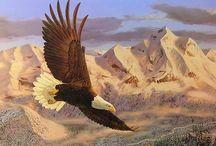 Bald Eagle / Learn more about the Bald Eagle.