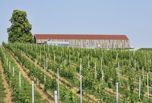 Wineries - Slovenia / About 75% of Slovenia's production is white wine. Almost all of the wine is consumed domestically and only a small part is being exported.