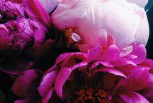 The colour - flowers
