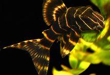 Fauna - Fish - Аквариумные жители