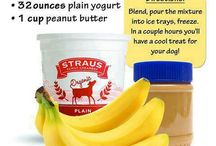 DIY DOGGIE TREATS / by Hot Dog Collars