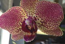 Orchids 2016 / Orchids