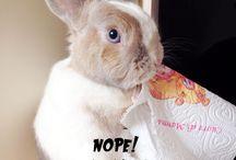 Bunnies!!!!
