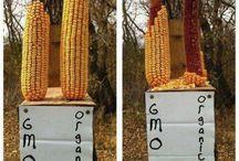 GMOs = Death / by Lisa Ellis
