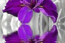 Kwiaty -gif....