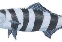 ZOO - MARINE FISH / MORSKÉ RYBY