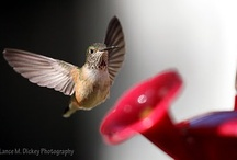 HUMMINGBIRDS / by Janis Wallace