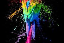 Parrots (rodney& Em