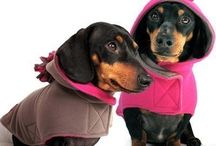 Furbaby Fashion / My two little dachshunds give this board two paws up. / by Krystalyn Zink