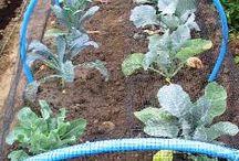 Gardening / Gardens