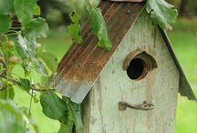 GARDEN - Birdhouses and correlations / Birdhouses, bird feeders, birdbath.