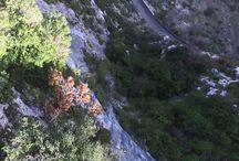 You Tube filme vos régions Fleurs de Soleil France / Classée au patrimoine mondial de l'Humanité le 31 juillet 2010, Albi, la Cité épiscopale- Parcs naturels ,voyages, You Tube , régions ,Fleurs de Soleil France .