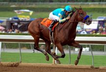 Pavilion Grand Hotel Welcomes American Pharoah / Pavilion Grand will welcome triple-crown winner American Pharoah to Saratoga Springs this weekend as the thoroughbred will compete in the 146th running of the Travers Stakes at the Saratoga Race Course on August 29.
