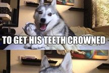 anti jokes