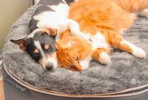 Лежак для наших любимцев / Уютная, мягкая постель для наших маленьких любимцев.