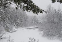 Snowy scenes, brrr / by Terri F.