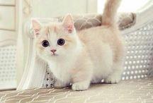 gatitos!!