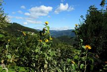 Jenesien / A fantastic place in the Dolomites