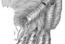 Wigs/Hairdos
