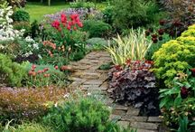 Down the Garden Path.... / An inspiration board for those looking for ideas on how to create the perfect garden pathway!  Helpful tips & tutorials from various Pinterest sources to help you get it done.