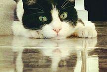 Zorba (gatto spaziale)