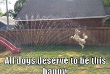 Happy, Happy, Happy!! / by Vicki Pass