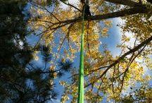 Lavori su alberi / Lavori su alberi. Interenti di cura e gestione di alberi urbani.