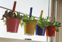 Herbs/Gardens