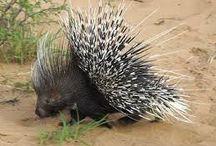 Fynbos Fauna