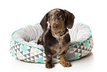 Dog Beds / The latest and hottest FuzzYard bed designs.