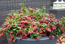 Tuin / Nieuwe tuin beplanting