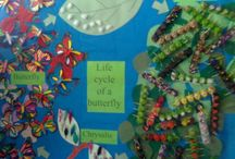 Life cycle of s butterfly