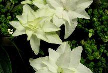 Garden Flowers I Adore / by Vintage Patterns Dazespast