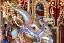 Carousel / by Stony Hill Farm Greenhouses, LLC